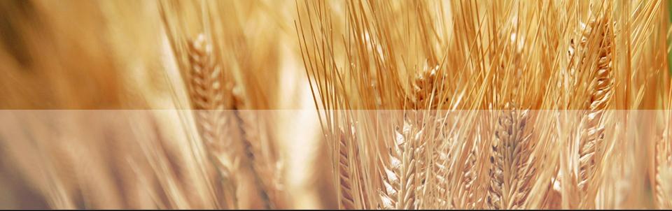 http://www.ingrasaminte-organice.ro//css/images/ingrasaminte/banner.jpg